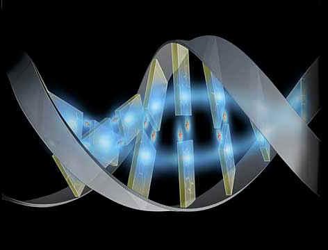dec_genoma.jpg